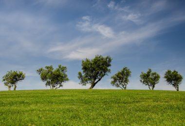 Máster en Ingeniería y Gestión Medioambiental se realizará en España.